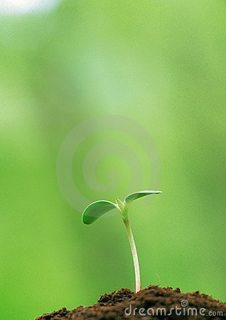 Free Young Buds Of Green Royalty Free Stock Photos - 9009138