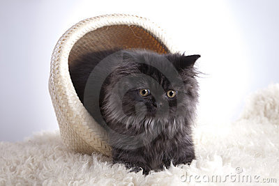 Young Cat in basket