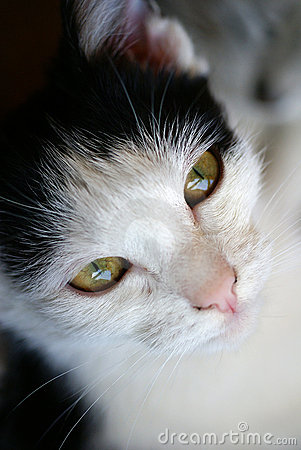 Young cat female