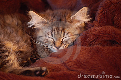 Young cat sleeping