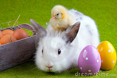 Young Chick and Rabbit