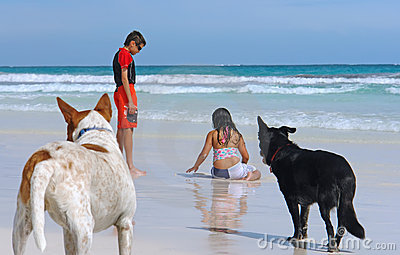 Young children playing on wet beach sand with dogs