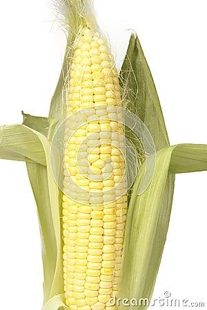 Young corn cob