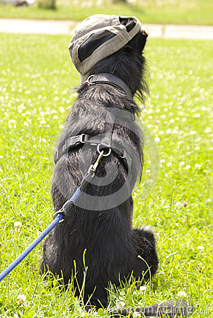 Young crossbreed Dog
