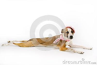Young dog lying on floor