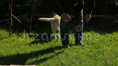 Young dog owner man playing with his labrador in the green park stock footage
