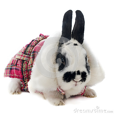 Young dressed rabbit