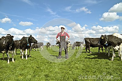 Young dutch farmer with his cows