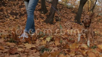 Young female and her pet take a walk in the forest stock video footage