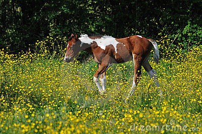 Young foal