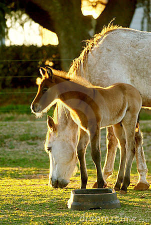 Young Foal with mom