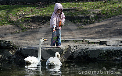 Young girl feeding geese