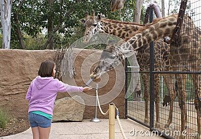 Young Girl Feeding Giraffe