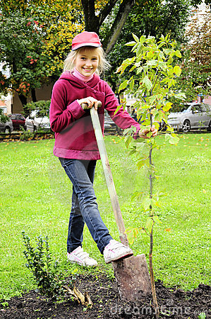 Young Girl Planting Tree In The Garden Royalty Free Stock Photo Image 24244065
