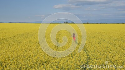 Young girl running through canola field - high angle view stock video