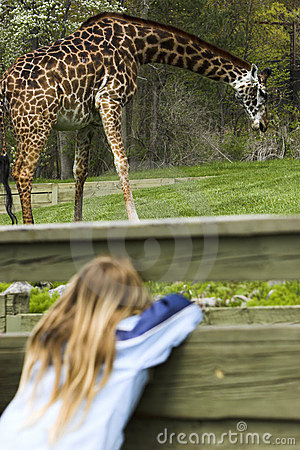 Young girl spying a giraffe