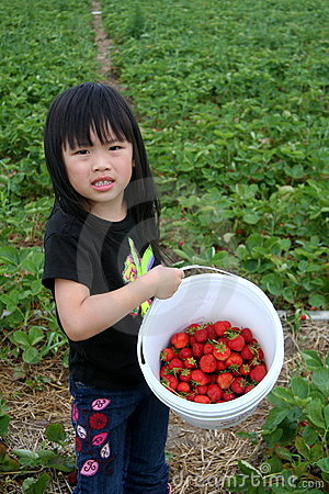 Young girl strawberry picking