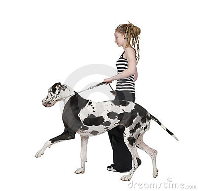 Young girl walking his dog (Great dane 4 years) ha