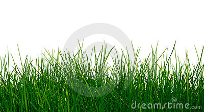 Young green grass