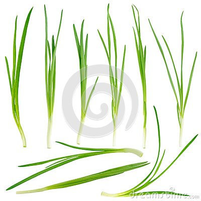 Free Young Green Onion Set Royalty Free Stock Photography - 28127717