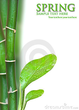 Young green plant of fig tree