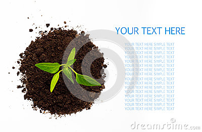 Young green plant isolated on a white background with space for text. top view