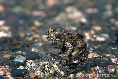 Young Green Toad Royalty Free Stock Photo - Image: 7661285