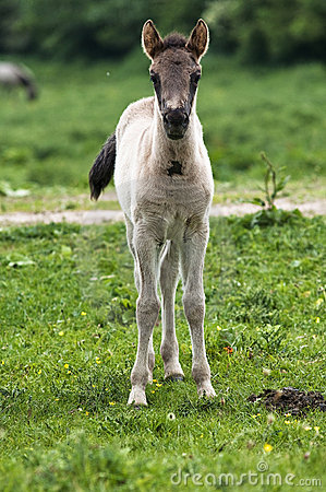 A young horse
