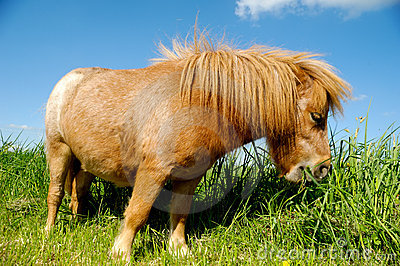 Young horse is eating grass
