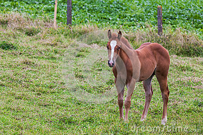 Young Horse