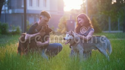 Young lovely couple caress their dogs outdoors recreation at sunset. Slow motion stock video footage
