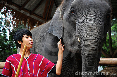 Young mahout with his elephant Editorial Photo