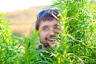 Young man in the bush of cannabis
