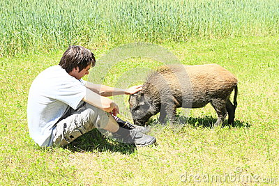 Young man stroking a wild pig