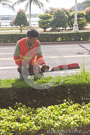 Young man using Power Hedge Trimmer Editorial Stock Photo