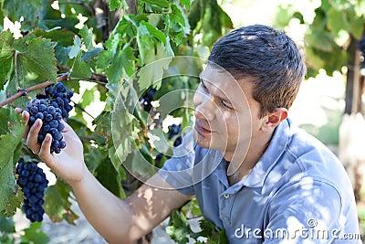 Young man at a vineyard