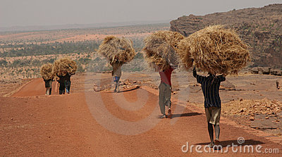 Young men carrying straw