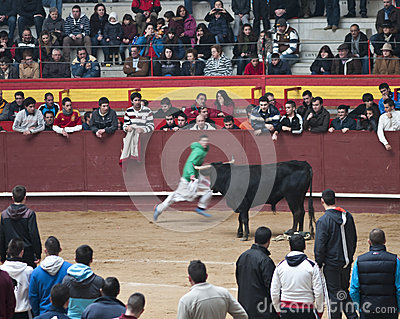 Young men teasing bulls in Valdemorillo Editorial Photography