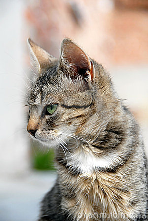 Young mixed-breed cat portrait