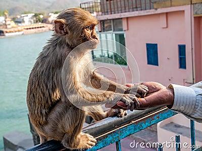 Young monkey sitting