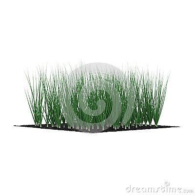 Free Young Onion Plants In The Garden On White. 3D Illustration Stock Photography - 102091932