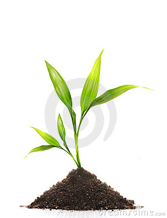 Free Young Plant Royalty Free Stock Photography - 4746297