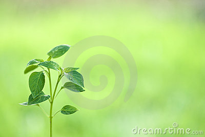 Young plant against natural green background