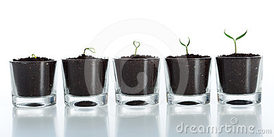 Young plant evolution - growth