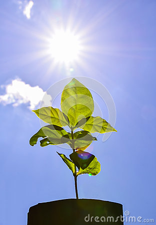 Free Young Plant Fresh New Life  Sun Power Flare Royalty Free Stock Photography - 46839037