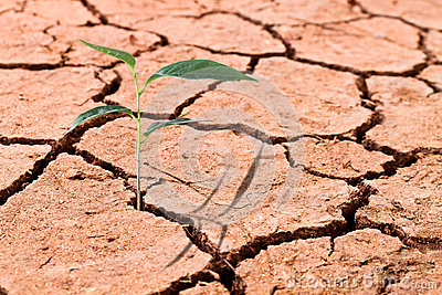 Young plant growing on cracked soil stock photo image 55584449 - Successful flower growing business ...