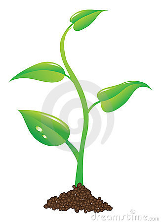 Young plant illustration