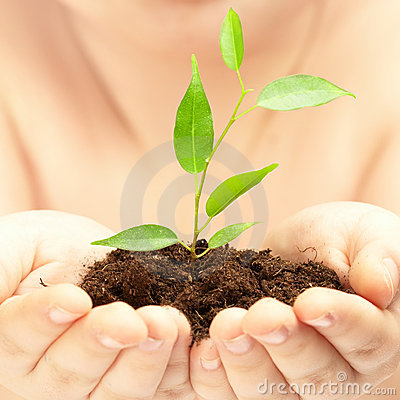 Free Young Plant In Hands Of The Person Royalty Free Stock Image - 6756146