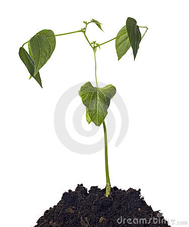 Young Plant Nature Beginnings Royalty Free Stock Images - Image: 13985829