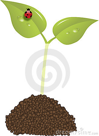 Young plant new life concept vector